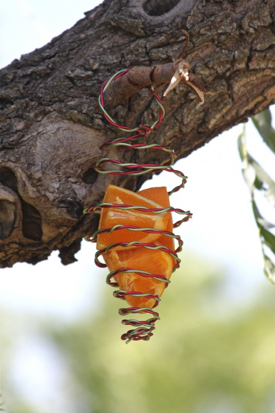 DIY colorful wire butterfly feeder with fruits (via acowboyswife.com)