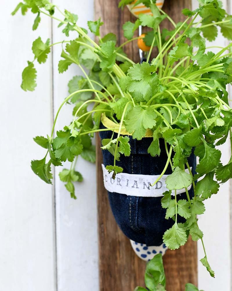 DIY upcycled denim herb planters