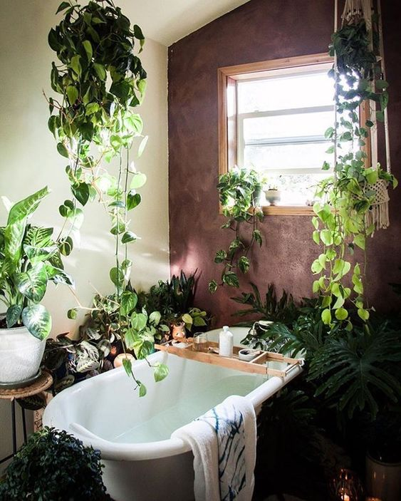 a boho jungle-themed bathroom with a burgundy wall, a free-standing tub and lots and lots of greenery and succulents