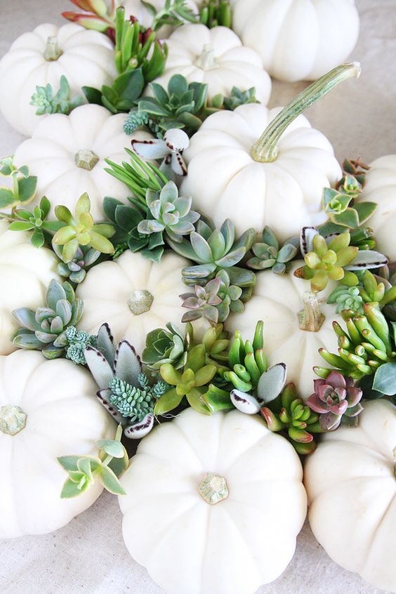 a gorgeous modern pumpkin arrangement of white pumpkins and pale succulents   place them wherever you want