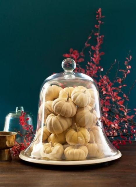 a cloche filled with mini white pumpkins is a great last minute decoration for fall and Thanksgiving parties