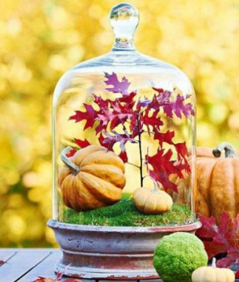 a cloche with moss, fake pumpkins and red fall leaves for a Thanksgiving centerpiece or just decoration