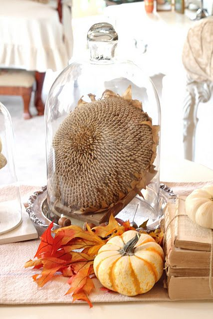 a cool cloche display idea with a dried sunflower head, acorns, leaves and a faux pumpkin