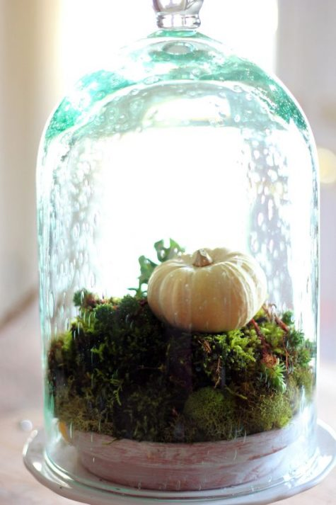 a green cloche with a bowl filled with moss and a fake pumpkin for a fresh touch on your table or mantel