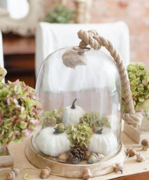 a neutral rustic cloche display with fake pumpkins, hydrangeas, acorns and pinecones and thick rope