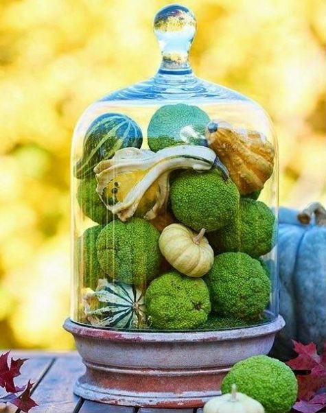 a rustic terracotta cloche with moss balls, pumpkins and gourds is an all-natural Thanksgiving decoration