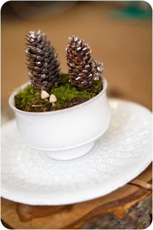 DIY natural winter terrarium with moss and pinecones