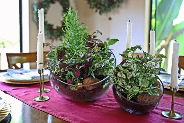 DIY all living winter inspired terrarium centerpieces