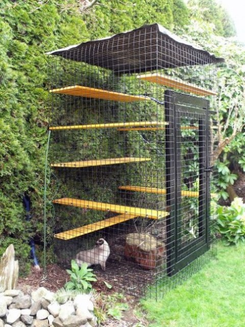 a modern small cat enclosure with shelves, a roof and a living wall to make the space feel fresh and outdoor like