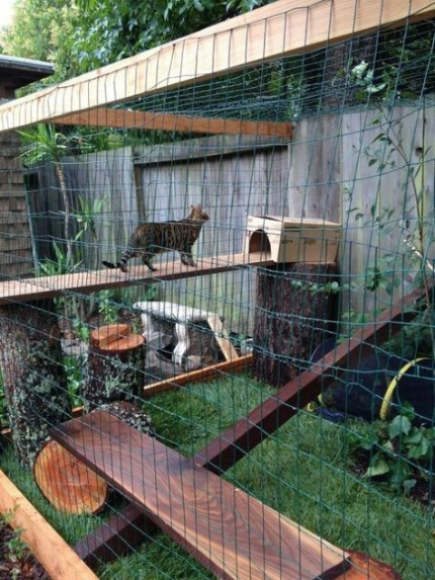 a handmade cat enclosure with wooden shelves, beams, boxes, tree stumps and green grass below