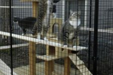16 a large cat enclosure with a wooden cat tower is a cool and fun gym for a whole company of cats
