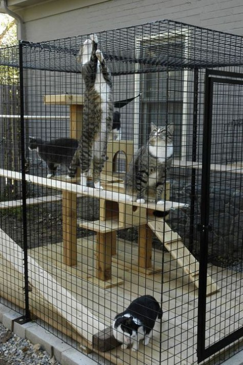 a large cat enclosure with a wooden cat tower is a cool and fun gym for a whole company of cats