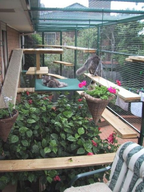 a large cat enclosure with paths, shelves, beds, a hammock, lots of greenery and plants and some suspended baskets