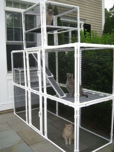 a large cat enclosure with several tiers and benches is a cool place to be and the pets can choose levels themselves