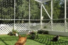 20 a large cat enclosure with shelves to sit on, wire to keep the cats safe and green grass and blooms