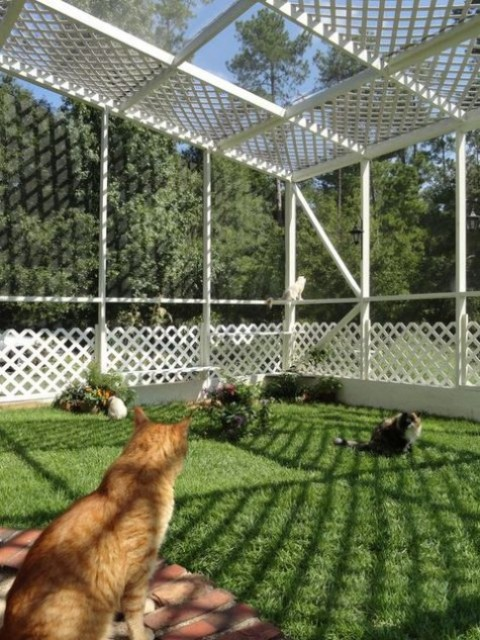 a large cat enclosure with shelves to sit on, wire to keep the cats safe and green grass and blooms