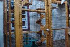 21 a large cat enclosure with shelves, stairs, a cool stairscase up to the top is a whole gym for a cat