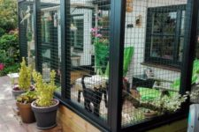 24 a cozy and chic cat enclosure with potted blooms and greenery, trees, outdoor furniture for a cat to enjoy