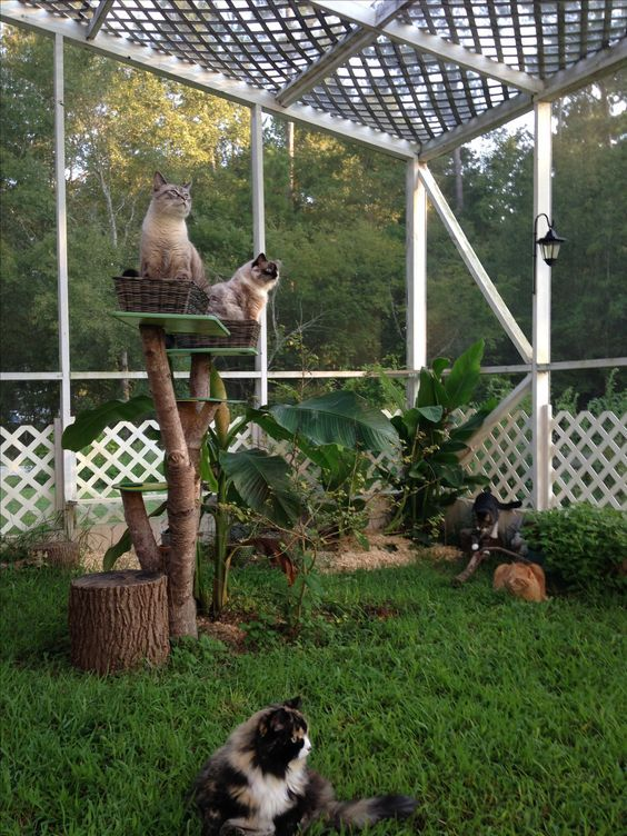 a welcoming cat patio with grass and tropical plants, a cat tree and some branches here and there
