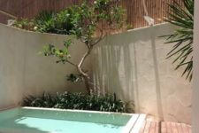 a contemporary backyard with a deck, simple loungers, a tree and a plunge pool – who needs more for happiness
