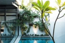 a mini backyard with only a plunge pool enclosed in glass, with some greenery climbing up the wall