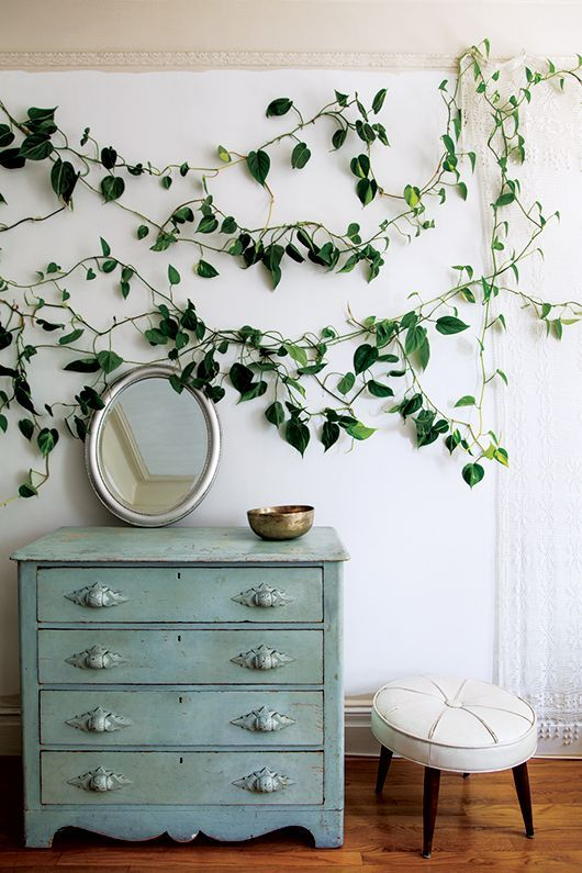 a plain white wall made cool and catchy with a climbing plant will make your indoor space feel outdoorsy