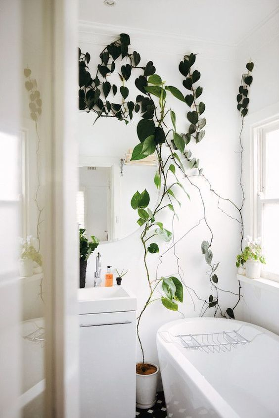 an all-neutral bathroom spruced up with climbing plants in pots bring a fresh and vivacious feel to the space