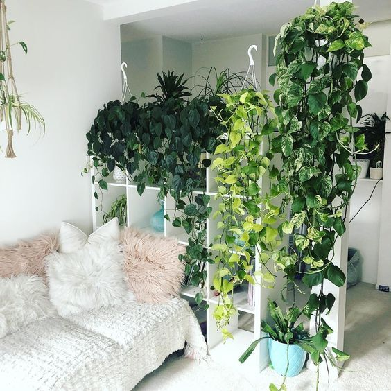 a storage unit that doubles as a space divider covered with climbing plants turns your home into a jungle