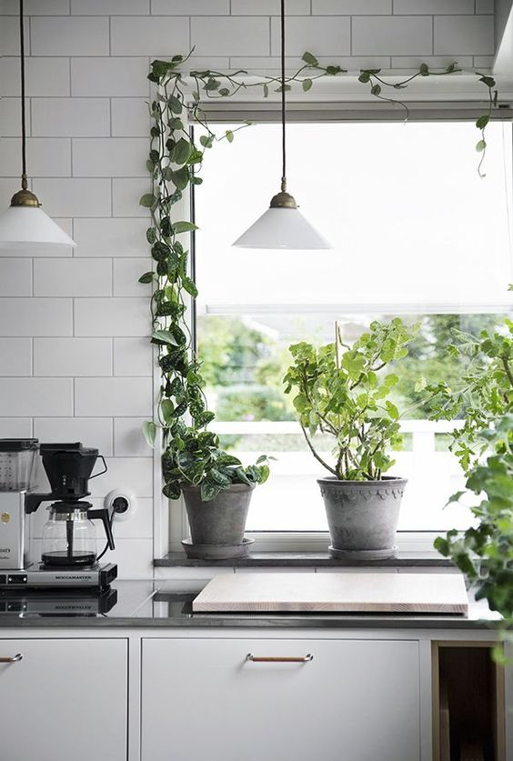 a monochromatic kitchen with a Nordic feel and climbing plants covering the window to refresh the space