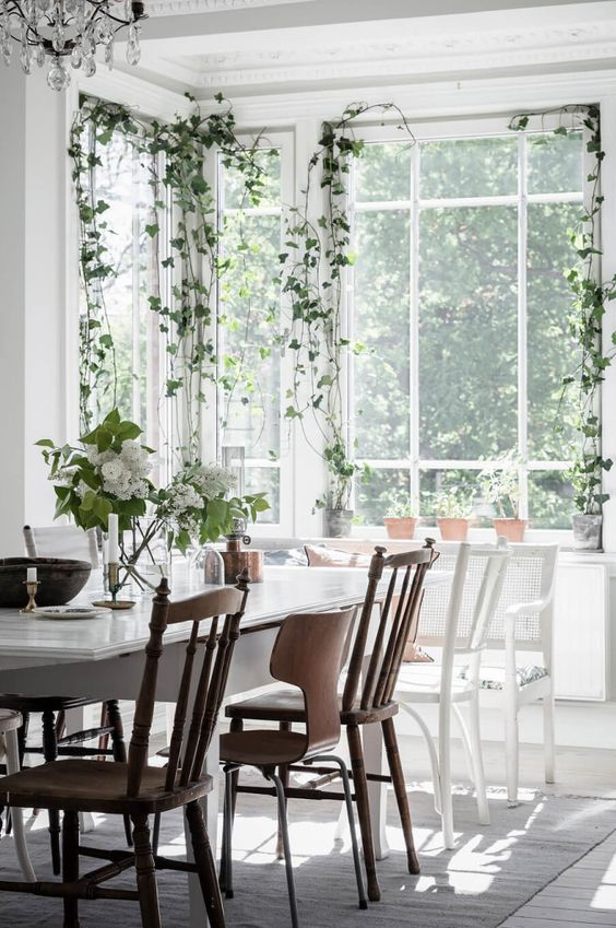 a light-filled dining room with several climbing plants that make the space feel outdoor