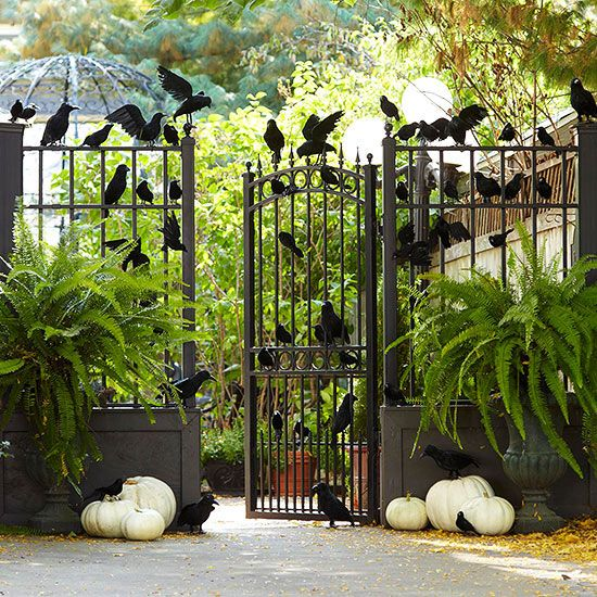 a rustic Halloween gate with tons of blackbirds, pumpkins on the ground and ferns in planters is easy to arrange