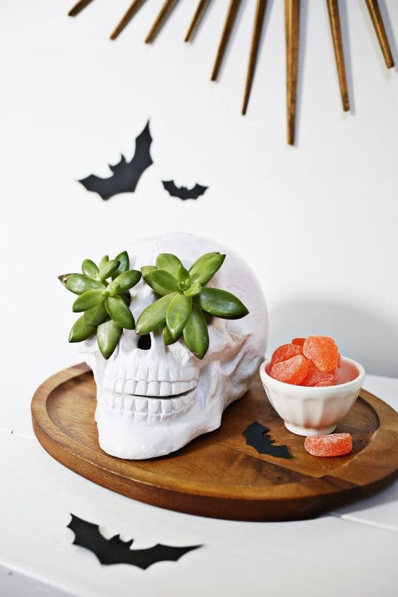 black bats, a skull with succulents instead of eyes for stylish minimalist Halloween decor