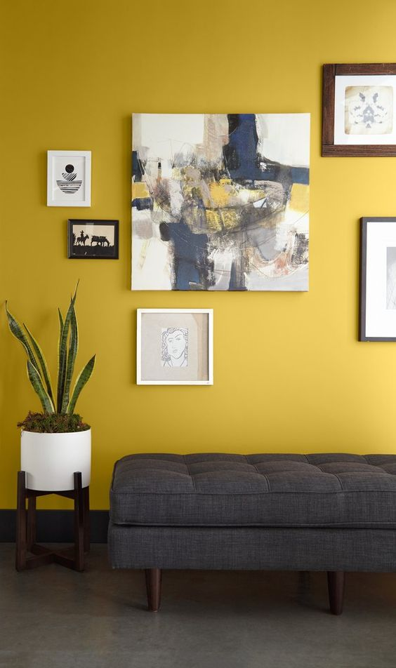 a stylish entryway with a mustard accent wall, a grey upholstered bench, a monochromatic gallery wall and a potted plant