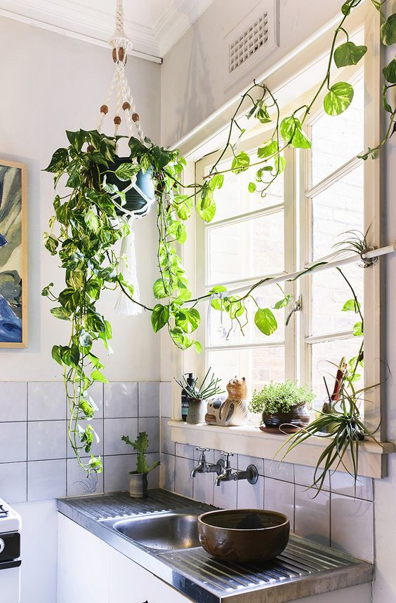 potted greenery, succulents and other plants refresh the space at once and make the kitchen feel spring-like