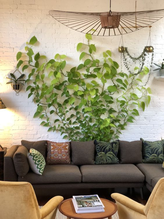 a boho living room with a taupe sofa, neutral chairs, a catchy chandelier and an indoor vine climbing up