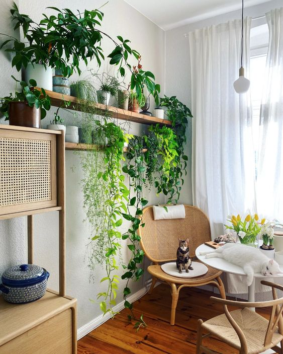 a cozy reading nook with rattan furniture, open shelves with potted plants and climbers is very chic and fresh