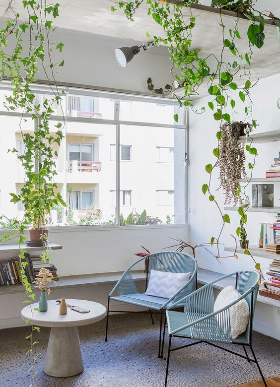 a cozy space by a large window is refreshed and made cool with climbing plants