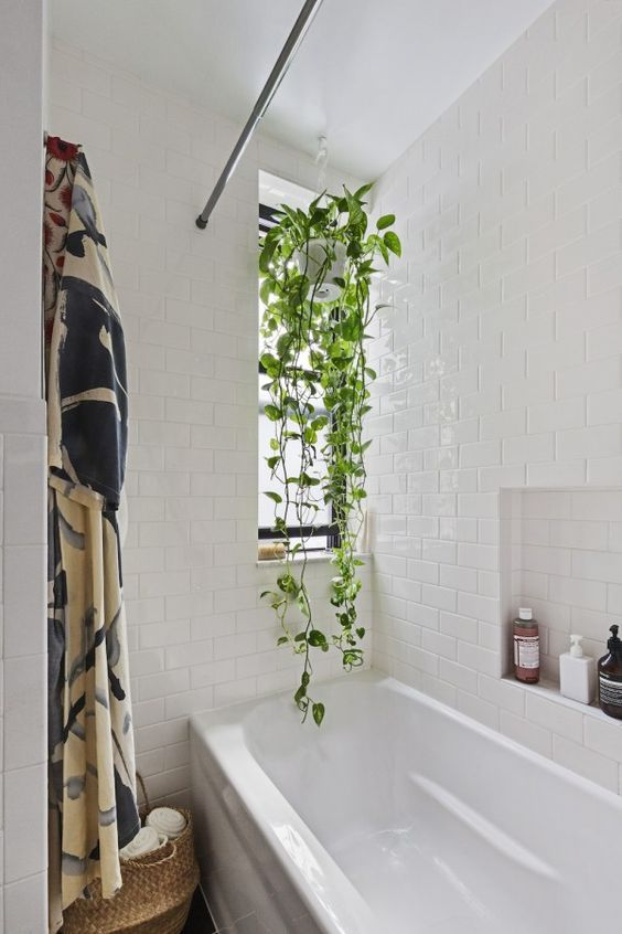 a modern white bathroom with subway tiles, a climbing plant that keeps privacy and enlivens the space
