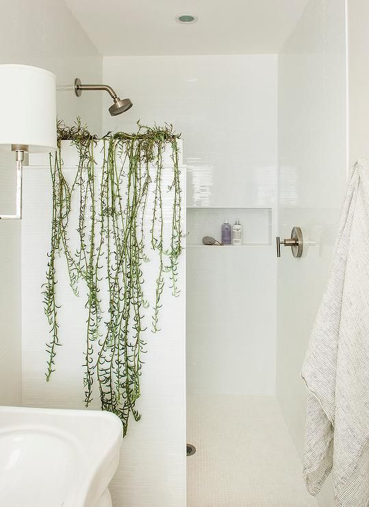 a small white bathroom enlivened with climbing plants is a lovely space that looks calming