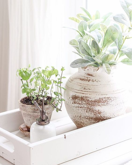 a wooden tray with potted greenery in shabby chic whitewashed planters is always a good idea for a rustic space