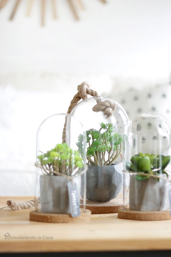 mini greenery pots in cloches will become a lovely and simple spring centerpiece or just a cluster decoration