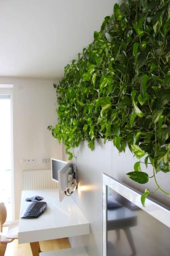 modern home office with a living wall done with climbing plants looks more soothing and relaxed