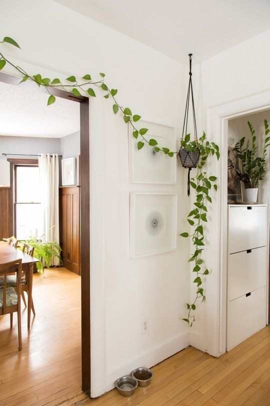potted greenery covering the doorway will bring a spring feel to the space in an eco-friendly way