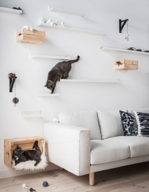 a chic contemporary cat walk made of IKEA ledges and some crates will make your kitties amused and will inspire their exercising