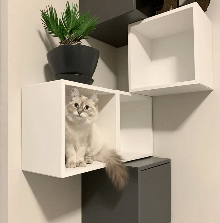 a stylish modern cat wall out of the IKEA Algot or Boaxel units is a cool idea to let your cat choose a place to stay