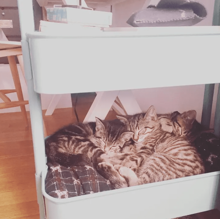 a Raskog utility cart with a lower part turned into a comfy cat bed is a cool and easy hack to make