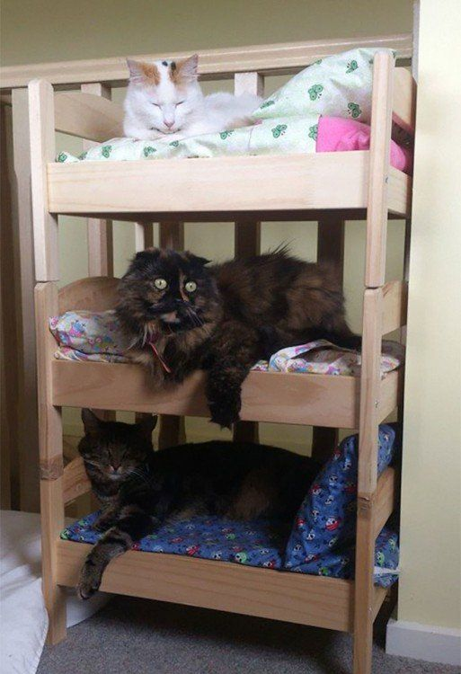 a three-tiered IKEA Duktig doll bed is a great idea for cats and dogs, they can occupy it anytime