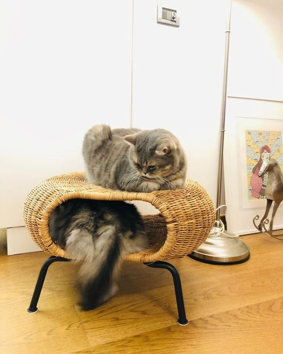an IKEA ottoman taken by cats who use it as a bed and a shelter to hide in is a cool way to repurpose the piece