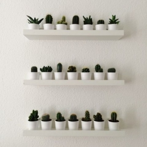 IKEA Ribba ledges with little cacti and succulents on display is a pretty home garden, can be used for herbs, too
