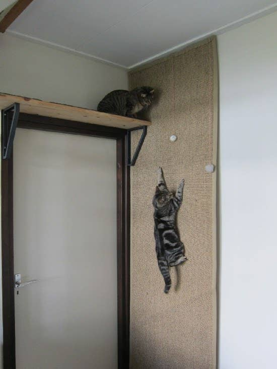 an Osted rug by IKEA attached to the wall can become a fun scratcher and even climber if your cat feels like it